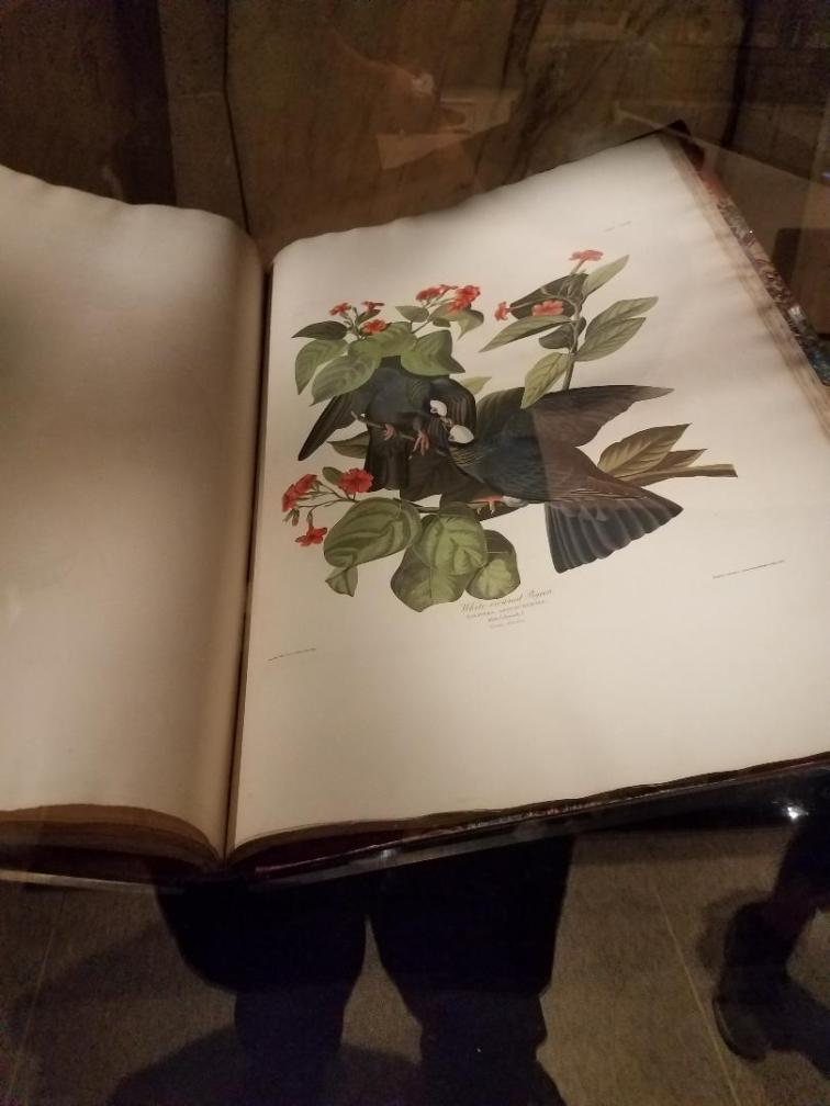audubon bird book